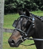 Pony and Mini Harness Bridle