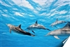 Dolphins in water Vinyl Wall Mural Decal Sticker