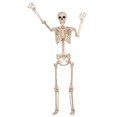 "60"" Tall Halloween Decoration Pose-n-Stay Skeleton"