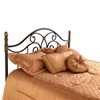 Dynasty Iron Headboard Curving Design Autumn Brown Finish