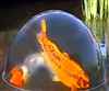 "All New for Large Koi & Ponds!!  24"" Dome with Kit **Call for Freight prices **Allow 2-3 weeks for delivery"