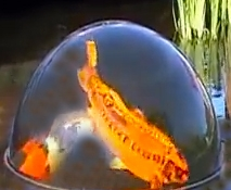 "All New for Large Koi & Ponds!!  36"" Dome with Kit **Call for Freight prices **Allow 2-3 weeks for delivery"