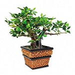 "Artificial Bonsai Plant in a Square Seagrass Container 12"" Overall Height (NUDT7318)"