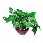 "Artificial Ivy Plant in a Mahogany Fiberglass Pot 8"" Overall Height (NUDT7901)"