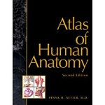 Atlas Of Human Anatomy Book Netter (538 0008)
