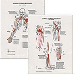 Peripheral Entrapment Neuropathics 2 Chart Set (57