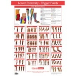 Trigger Point Chart Lower Extremity (573 0139)