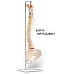 Stand For Full Spine (734 0003)