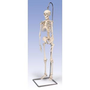 Mini Skeleton / On Hanging Stand (734 0058)
