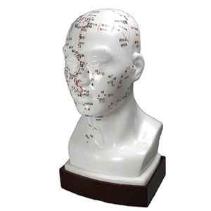 "Acupunture Points - Head Model - 7.9"" High (176 0153)"