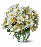 Simply Daisies Arrangement