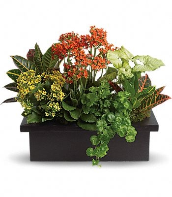 Stylish Plant Assortment