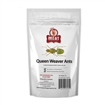 Meat Maniac Salted Queen Weaver Ants