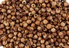 5 Grams - Navajo Ghost Beads Cedar Juniper Berries Seeds with Holes
