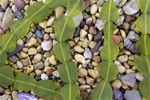 Strand of New 2013 Sea Glass Flat Freeform Beads - Lime Green