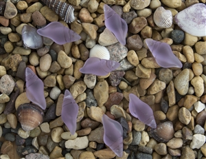 1 Sea Glass Mini Conch Shell Pendant - Periwinkle (Color Changing)