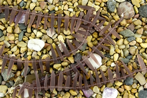 Strand of Sea Glass Tusk / Dagger Beads - Medium Amethyst