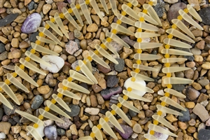 Strand of Sea Glass Tusk / Dagger Beads - Lemon Yellow with Hyacinth Spacers