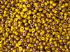 6/0 Toho Japanese Seed Beads - Hybrid Frosted Yellow Apollo #Y853F