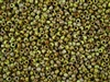 8/0 Toho Japanese Seed Beads - Hybrid Sour Apple Picasso #Y310