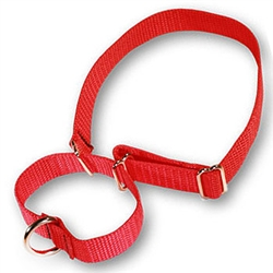 Martingale Pet Collars 1in in Heavywieght Polypro