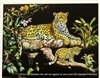 8x10 Inch Leopard at Night Fine Art Print and Poster Animals in Leopards #X79-810-L