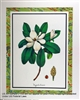 8x10 Inch Magnolia Sinensis Fine Art Print Poster Floral in Magnolias #x36-810-B