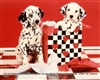 8x10 Inch Dalmation Fine Art Print and Poster Animals in Dogs #x41-810-C