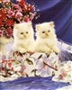 8x10 Inch Kittens Fine Art Print and Poster in Cats and Kittens #x41-810-G
