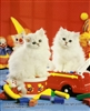 8x10 Inch Kittens Fine Art Print and Poster in Cats and Kittens #x41-810-J