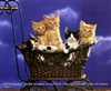 8x10 Inch Kittens Fine Art Print and Poster in Cats and Kittens #x41-810-K