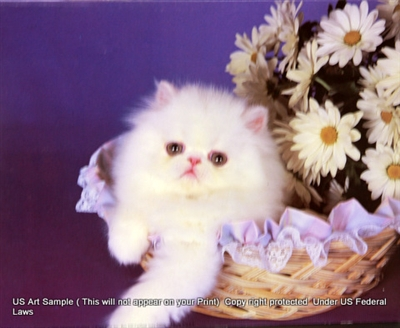 8x10 Inch Kittens Fine Art Print and Poster in Cats and Kittens #x41-810-L