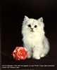 8x10 Inch Cat and Rose Fine Art Print and Poster in Cats and Kittens #x41-810-M