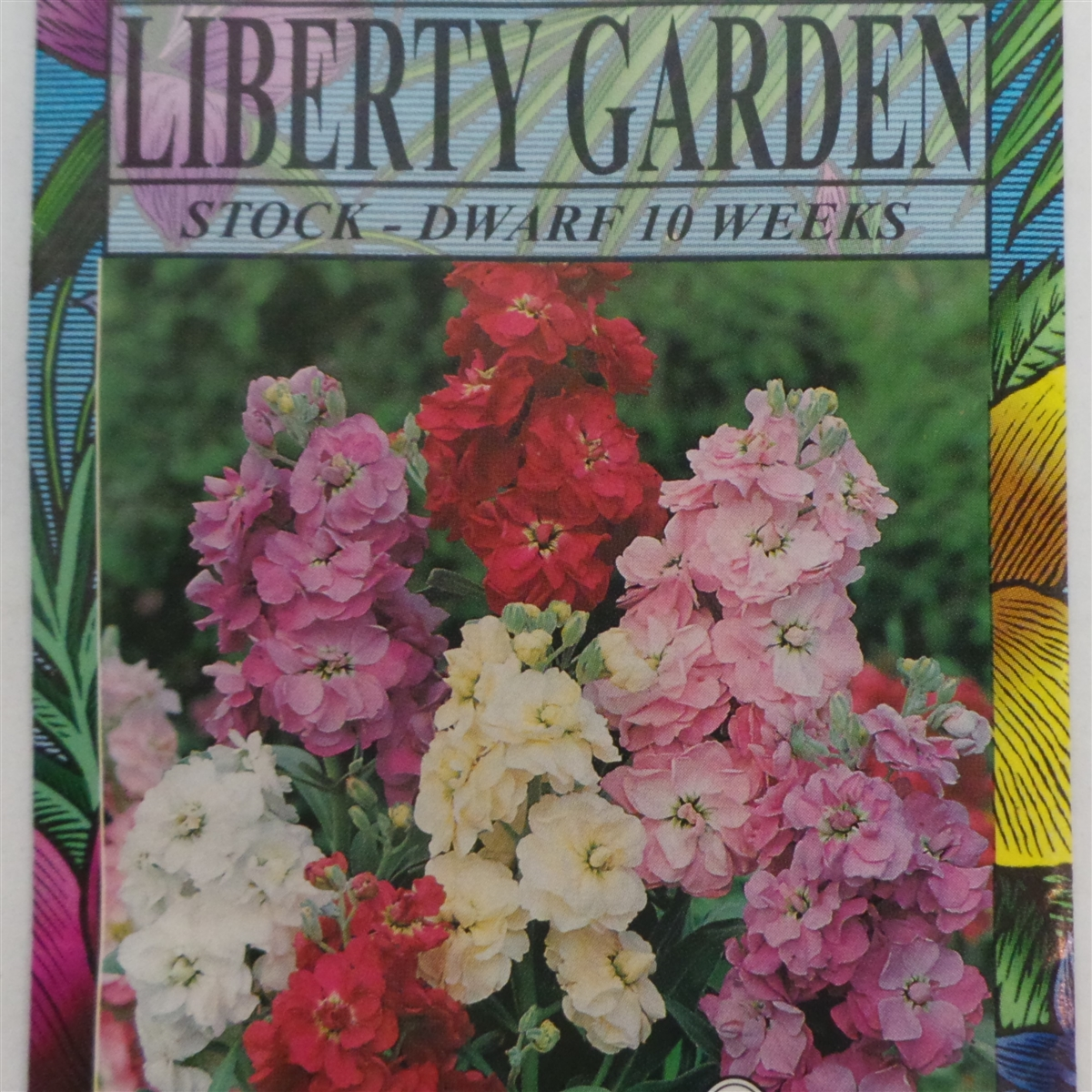 Stock Dwarf 10 Week Annual Flower Seeds 1 Packet