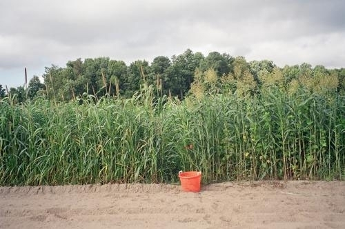 Image Result For Weed And Seed Lawn