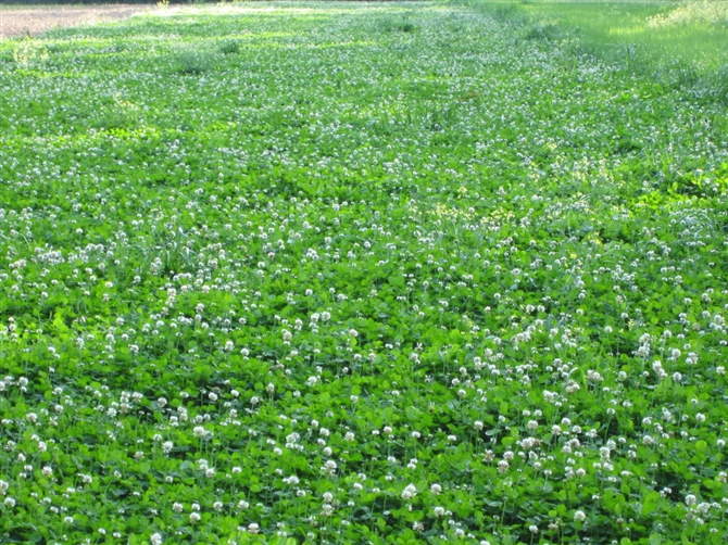 Best Food Plot For North Texas