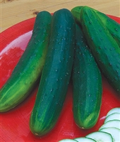 Cucumber Garden Sweet F1 Burpless Seed Hybrid - 1 Packet