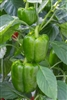 Pepper Early Calwonder Seed Heirloom - 1 Packet