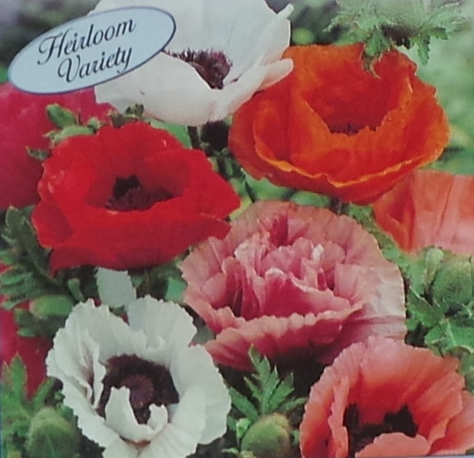 Oriental Poppy Pizzicato Mix Seed Heirloom 1 Packet