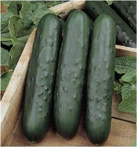 Cucumber Poinsett 76 Seed Heirloom - 1 Packet