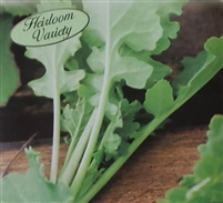 Turnip Seven Top Seed Heirloom - 1 Packet