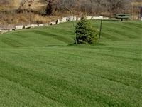 Midnight Kentucky Bluegrass Seed - 10 Lbs.