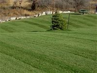 Midnight Kentucky Bluegrass Seed - 25 Lbs.