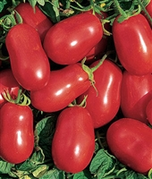 Tomato Roma VF Seed - 1 Packet