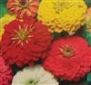 Zinnia California Giant Mix Seed - 1 Packet