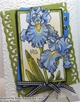 Soft Blue Iris Card