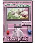 ambient-kittens-dvd