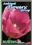 ambient flowers dvd