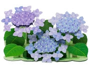 Hydrangea Blossoms Bouquet Decorative 3D Pop Up Greeting Card