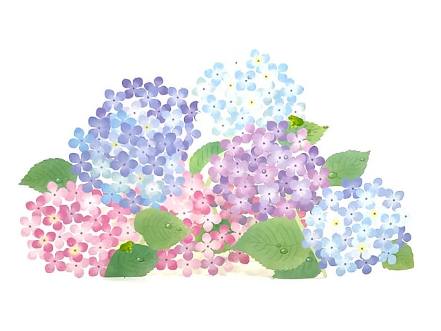 Delicate laser cut hydrangea blossoms 3d pop up greeting card delicate laser cut hydrangea blossoms 3d pop up greeting card m4hsunfo